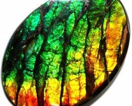 8.15 CTS AMMOLITE STONE FROM CANADA [SAFE120]