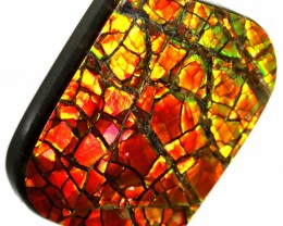 21.00 CTS AMMOLITE STONE FROM CANADA [SAFE133]