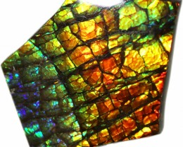 20.30 CTS AMMOLITE STONE FROM CANADA [SAFE140]