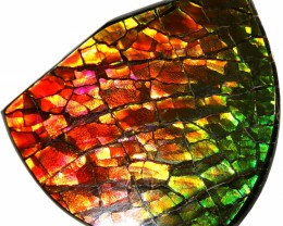 34.30 CTS AMMOLITE STONE FROM CANADA [SAFE143]