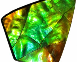 37.95 CTS AA AMMOLITE STONE FROM CANADA [SAFE147]