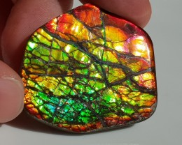 56,60ct Ammolite - Big & very bright with dragon Skin pattern!