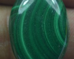 30.50 Cts Natural Malachite Cabochon (UnHeated + UnTreated) x42-66