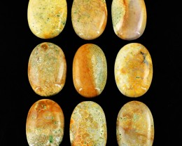 Genuine 266.00 Cts Oval Shape Coral Fossil Gemstone Lot