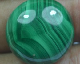 33.25 Cts Natural Malachite Cabochon (UnHeated + UnTreated) x42-91