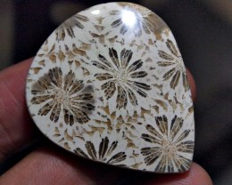 46.55crt PERFECT MOTIF FOSSIL CORRAL TRATAI FLOWER