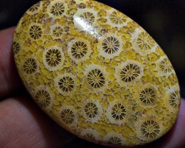 78.00CRT BEAUTY YELLOW  FOSSIL CORAL TRATAI FLOWER AGATE