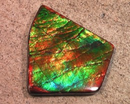 SUPERB Pattern & Color  'Top' Natural Ammolite Gemstone BIG Collector