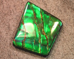 'WOW Pattern and Bright neon color' Natural Ammolite Gem MY COLLECTION
