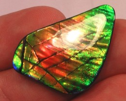 FANTASTIC CHANGING PATTERN & RAINBOW COLOR Natural Ammolite Gemstone