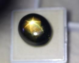 35.31ct 6 Rays Black Star Sapphire Bangkaja Lot LZ1263