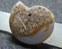 Nice fossils cabochons designs 55.10 cts