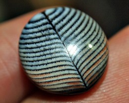 10.35crt RARE NATURAL FOSSIL  BEAUTYFUL MOTIF