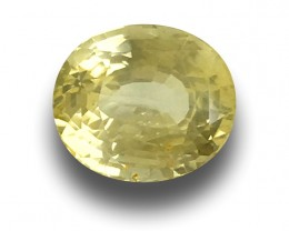 Natural Unheated Yellow Sapphire|Loose Gemstone|New|