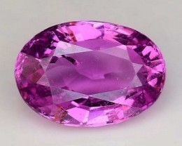 1.55 Cts Untreated Top Color Sparkling Intense Pink Sapphire ~ SF2