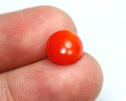 Lot 01 ~ 2.68Ct Natural Japanese Red Coral Cabochon