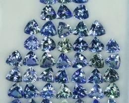 33.22 Cts Natural Tanzanite Double Shade Blue-Green 6.0 mm Trillion 45 Pcs