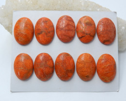 152cts New orange ccoral cabochons wholesale  healing stone (A639)