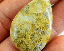 Genuine 36.00 Cts Coral Fossil Pear Shape Gem