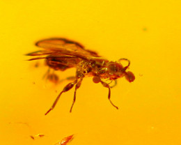 1.93cts Natural Baltic Million Years Insect Amber /DE137