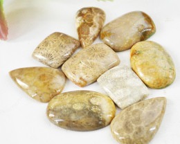 Genuine 190.00 Cts Untreated Coral Fossil Cabochon Lot