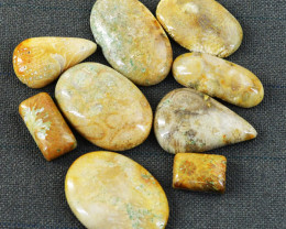 Genuine 135.00 Cts Untreated Coral Fossil Cabochon Lot