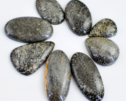 Genuine 200.00 Cts Untreated Crinoid Fossil Cabochon Lot