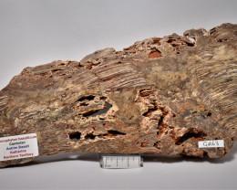 Stromatolite Conophyton basalticum slab, Australia (GR63)