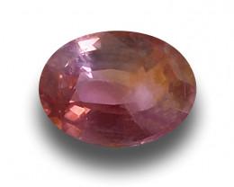 Natural Unheated Pinkish Orange Sapphire|Loose Gemstone|New
