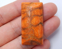 New Arrival Natural Coral Fossil Cabochon Polished Gem ,Healing Stone B334