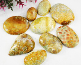 Genuine 195.00 Cts Coral Fossil Gemstone Lot
