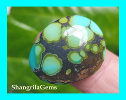 23mm Tibetan turquoise cabochon spiders web markings  free form 22ct 23 by