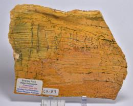 Strelley Pool Stromatolite Slice 3.4 byo Australia (GR189)