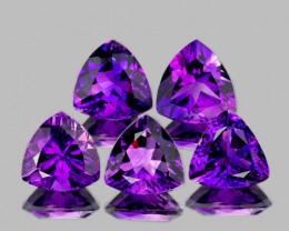 5.00 mm Trillion 5pcs 2.16cts Intense Purple Amethyst [VVS]