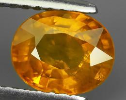 1.45 Ct_Stunning Lustrous Greenish_Yellow Natural Sapphire_Open Fire_