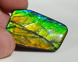 31,70ct Ammolite - Bright Colours!