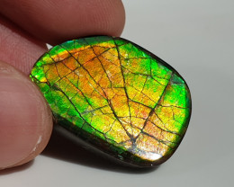 25,50ct Ammolite - Bright Colours & Dragonskin pattern!
