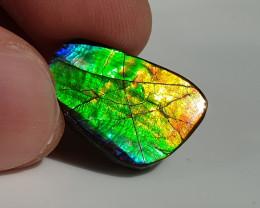 11ct Ammolite - Bright Colours!