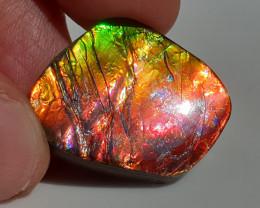 19,90ct Ammolite - Bright Colours!