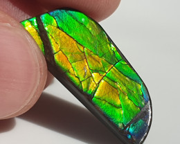 10,90ct Ammolite - Bright Colours!