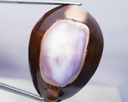 32.50 ct Natural Sea Shell