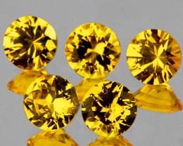 3.30 mm Round 5 pcs Yellow Sapphire [VVS]