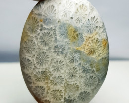 36.70 ct  Natural Fossil Coral Oval Cabochon Gemstone.