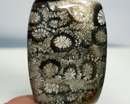 31.40 ct  Natural Fossil Coral Octagon Cabochon Gemstone.