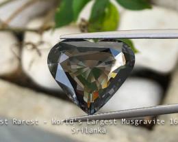 Rarest - Largest Natural Musgravite - 16 carats - Srilanka - SSEF Cert
