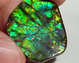 27,20ct Ammolite - Bright Colours!