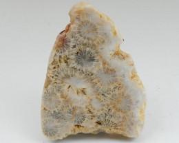 226Ct Natural Coral Gemstone Specimens,Beautiful Coral Rough D137