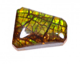 3.64ct Canadian Ammolite / Ammonite Lot D53