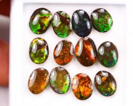 16.41ct Canadian Ammolite / Ammonite Lot D130