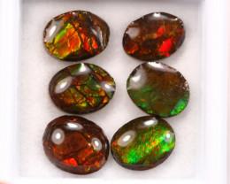 7.10ct Canadian Ammolite / Ammonite Lot D133